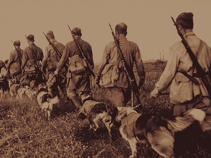 На тему войны. К 75-летию Победы! Единственная схватка в истории собак против людей.