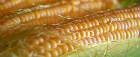 ГМО-продукция: должны ли ее маркировать производители?