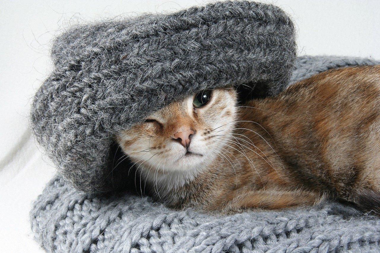Как справиться с шерстью кошки в квартире