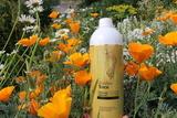 Аромат какого препарата Golden Trace вам напоминает свежесть леса во время утренней пробежки?