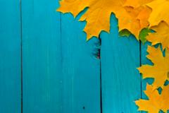 Осенью согреет MIZUDO