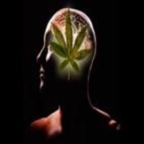 О влиянии марихуаны и гашиша на человека