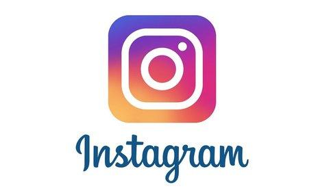 Fox Kits в Instagram