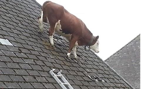 Как попасть на крышу и зачем?