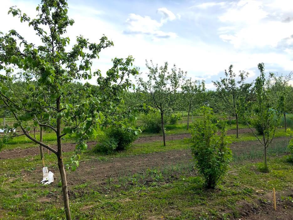 Борьба с вредителями и болезнями плодовых деревьев