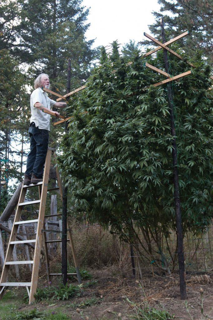 Лучший источник света для марихуаны,конопли,каннабиса.