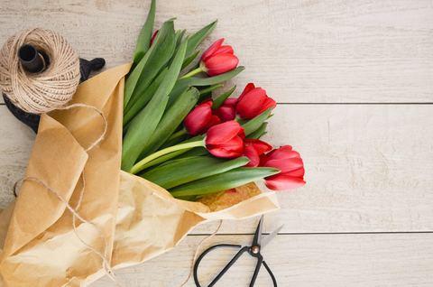 Весенние тюльпаны и их особенности