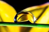 Самый важный компонент в препаратах Golden Trace и Space Fingers