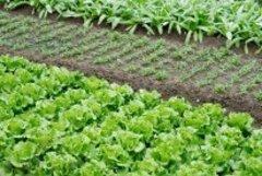 Правила высадки цветов и овощей