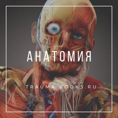 Анатомия