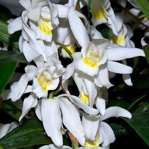 Орхидейные