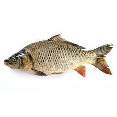 Рыба по видам
