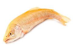 Экзотическая рыба