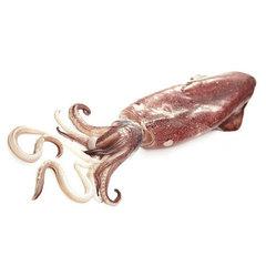 Кальмары / осьминоги