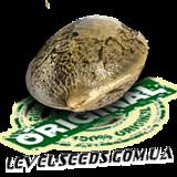 Регулярные семена конопли