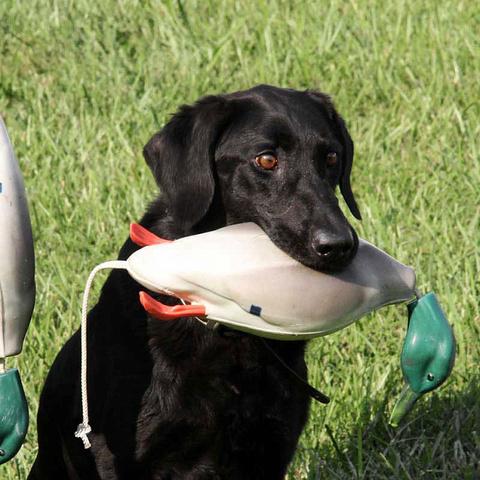Товары для натаски собак