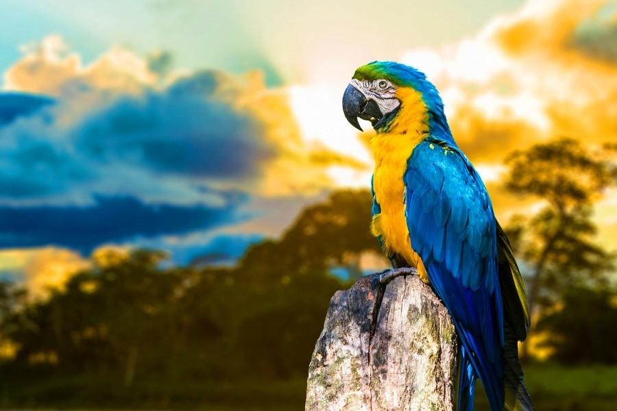 Картина раскраска по номерам 30x40 Разноцветный попугай на ...