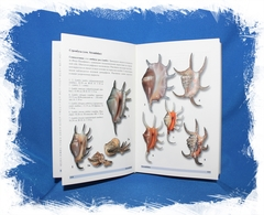 Морские раковины ламбисы