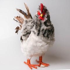Курица меховая