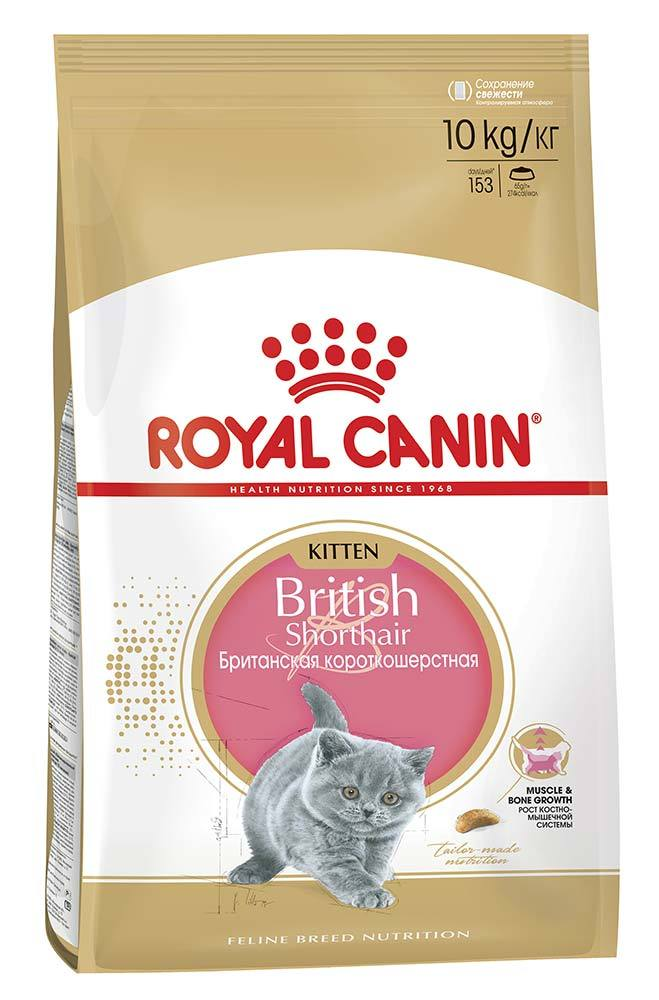 10 royal canin kitten british. Black Bedroom Furniture Sets. Home Design Ideas