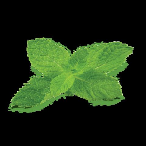 Купить табак для кальяна Fumari Mint в Орле