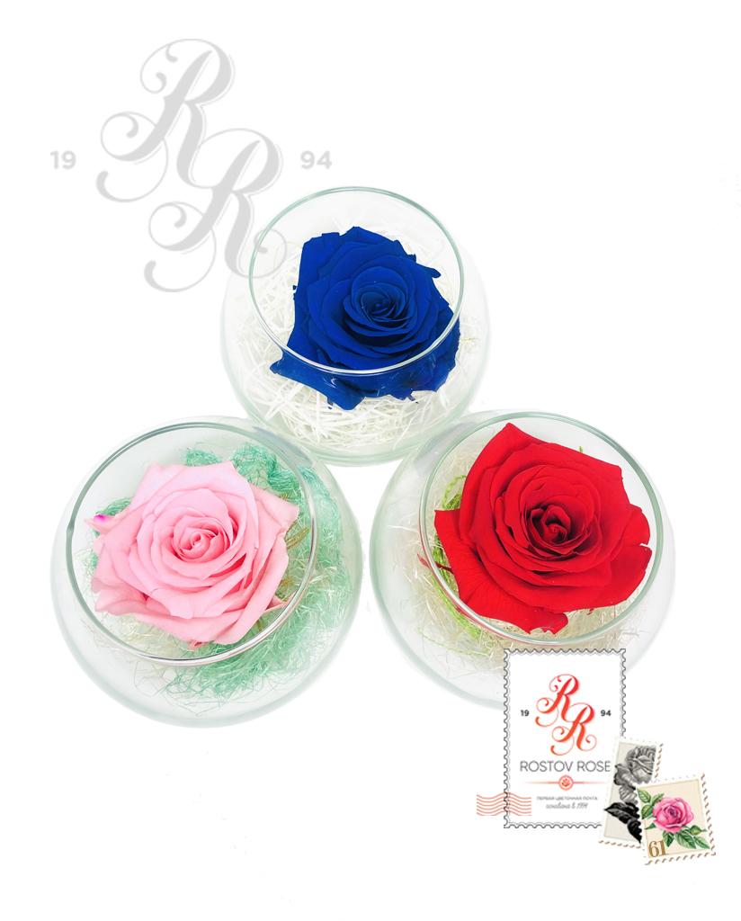 Роза розово-бело-синяя в бокале