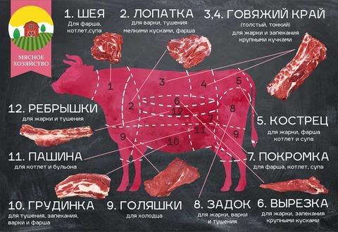Макет плаката по разделке мяса коровы  для Мясного хозяйства