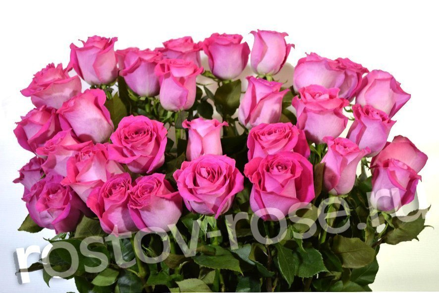 Букет 21 розовая роза (Эквадор)