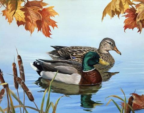 Картина раскраска по номерам 30x40 Утка и селезень в пруду ...