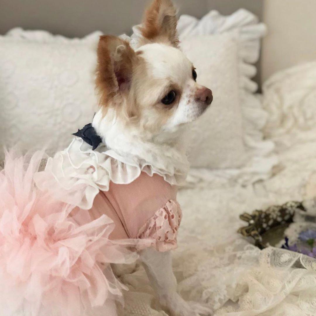 летняя одежда для собак