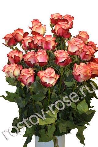 Букет 25 бело-красных роз (Зквадор)