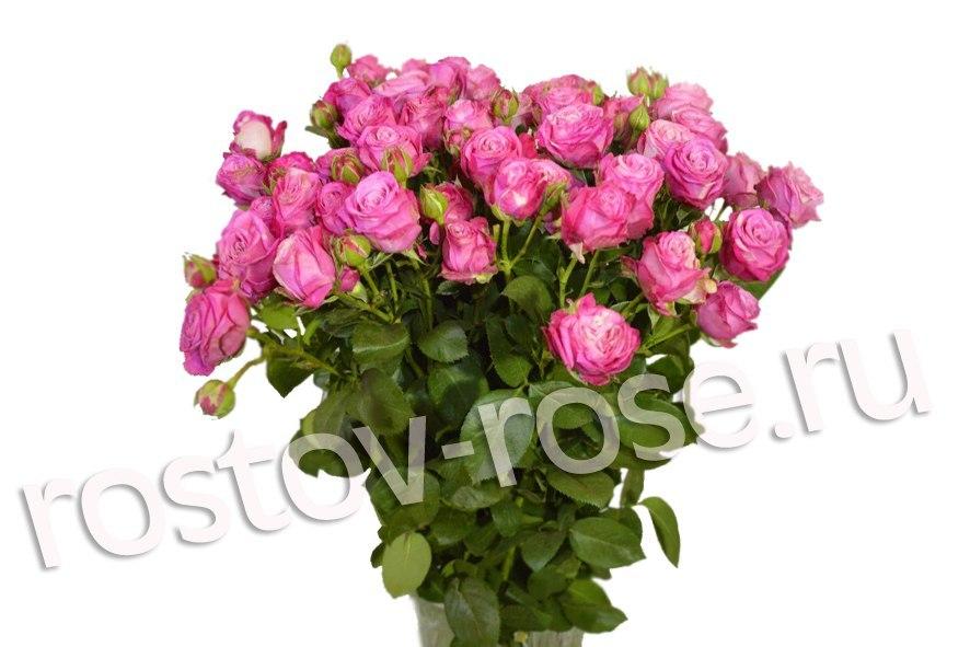 Букет кустовых роз Леди Бомбастик