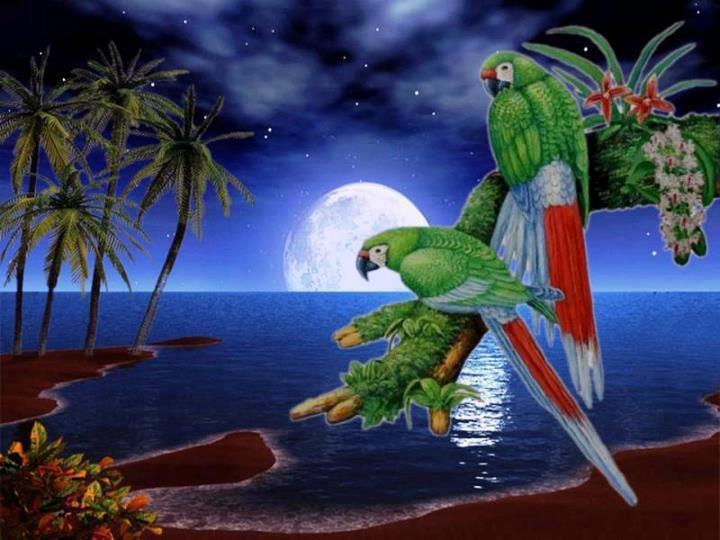 Картина раскраска по номерам 30x40 Попугаи на острове ...