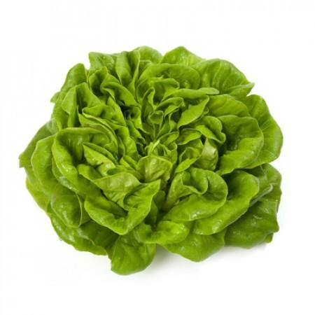 Многолистный маслянистый Аквино семена салата многолистный маслянистый, (Rijk Zwaan / Райк Цваан) АКВИНО.jpg