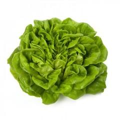 Аквино семена салата многолистный маслянистый, (Rijk Zwaan / Райк Цваан)