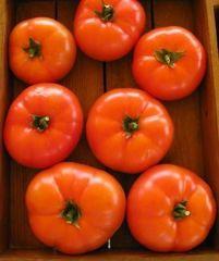 Мартэз F1 семена томата полудетерм.., (Seminis / Семинис)