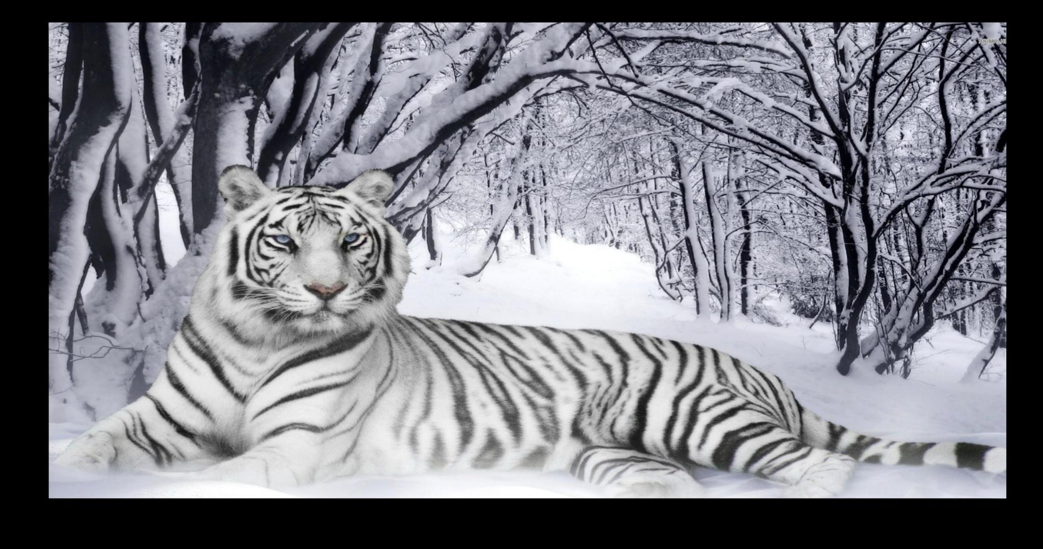 """Постеры Постер """"Белый тигр"""" п42.png"""