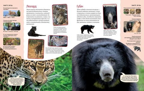 Яркий мир животных