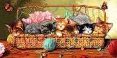 DIMENSIONS Новорожденные котята (Kitty litter)