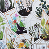 Набор открыток Succulent plant
