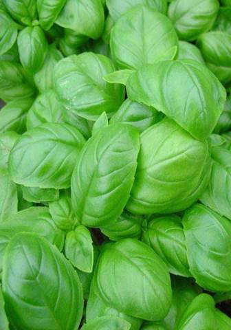 Семена Базилик Салатный лист овощной б/п