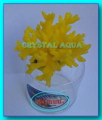 Актинии SH 066-3, коралл