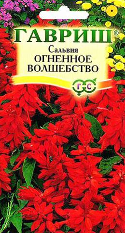 Семена Цветы Сальвия Огненное волшебство
