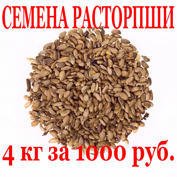 АКЦИЯ семена расторопши 4 кг за 1000 руб.