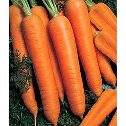 Bejo Камаран F1 семена моркови, (Bejo / Бейо) Камаран_F1_семена_овощей_оптом.jpg