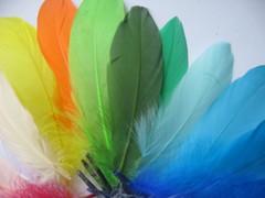 Уценка! Перья гуся 15-20 см.(10 шт.) (выбрать цвет)