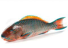 Рыба Попугай охлажденная~2.5кг
