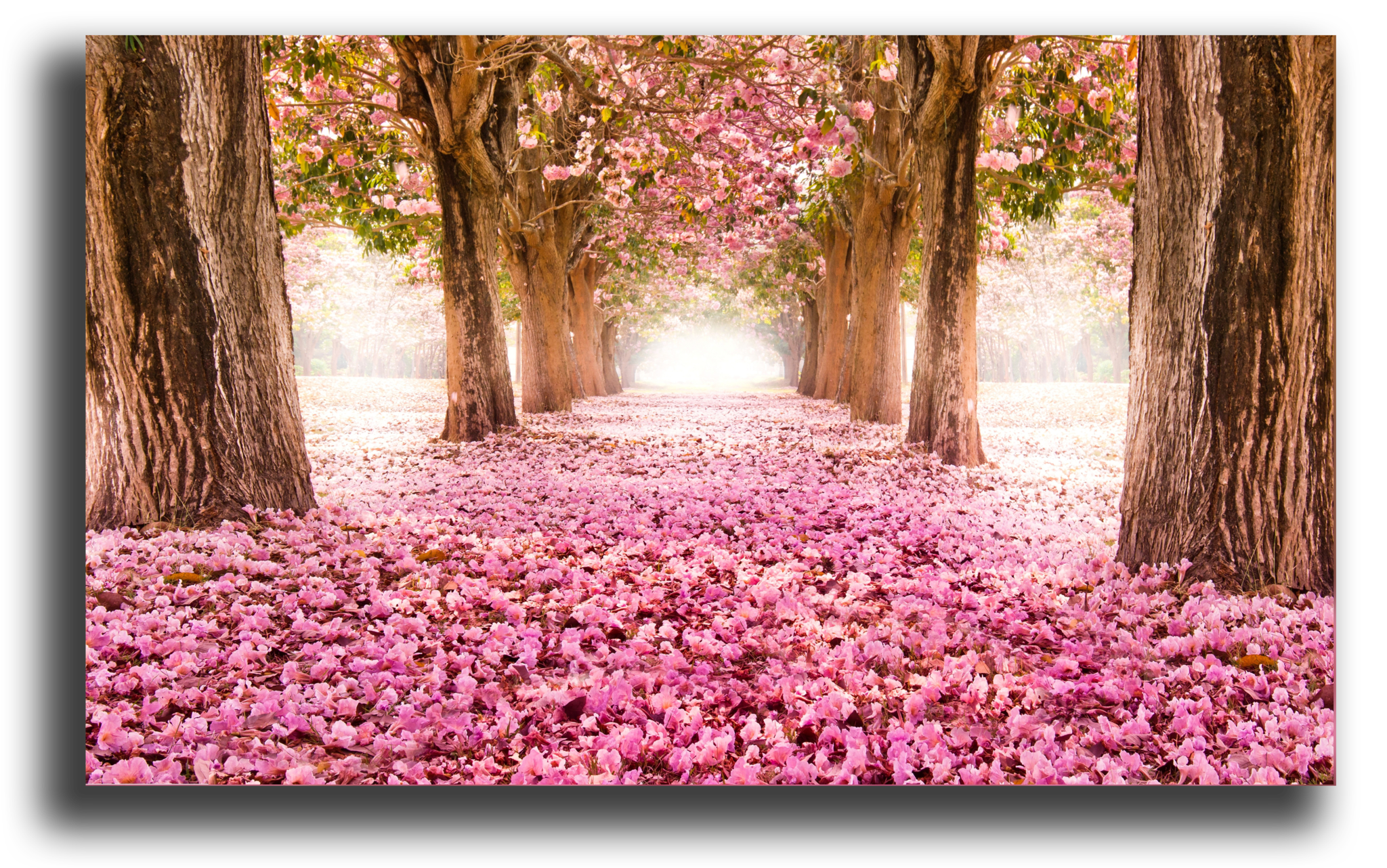 "Природа Постер ""Розовый сад"" п12.png"