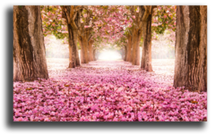 "Постер ""Розовый сад"""