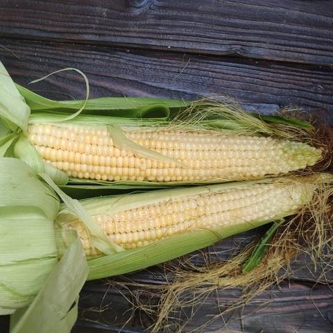 Фотография Кукуруза домашняя мягкая (початок) купить в магазине Афлора